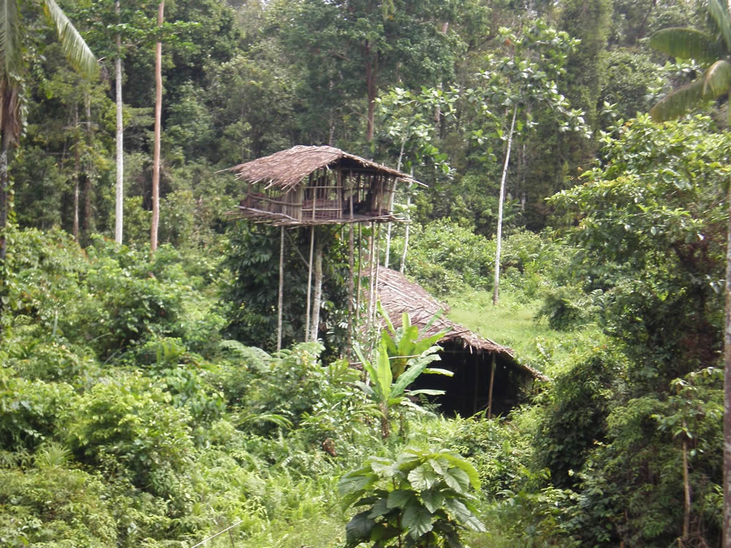 Picture of: Korowai Tree House West Papua Indonesia Photo Gallery Funny Buildings